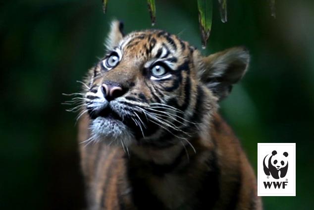 WWF stop au massacre